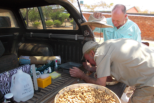 Jock Brandis and Randy Shackleford test peanut aflatoxin levels in the tailgate of their truck in Chipata, Zambia in 2015.