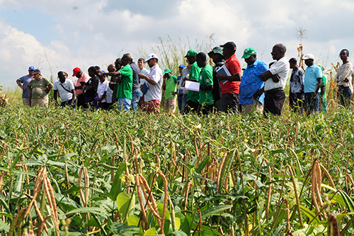Government and non-profit representatives visit a PROMAC Conservation Agriculture demonstration plot.